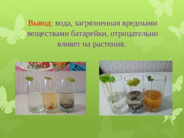 Вывод:  вода, загрязненная вредными веществами батарейки, отрицательно влияет на растения.