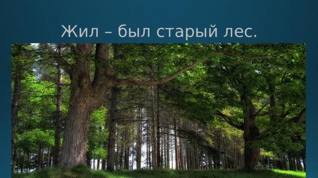 Жил – был старый лес.