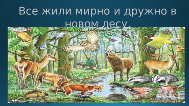 Все жили мирно и дружно в новом лесу.