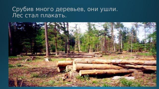 Срубив много деревьев, они ушли.  Лес стал плакать.