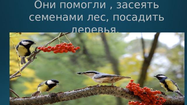 Они помогли , засеять семенами лес, посадить деревья.