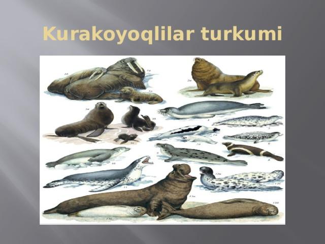 Kurakoyoqlilar turkumi