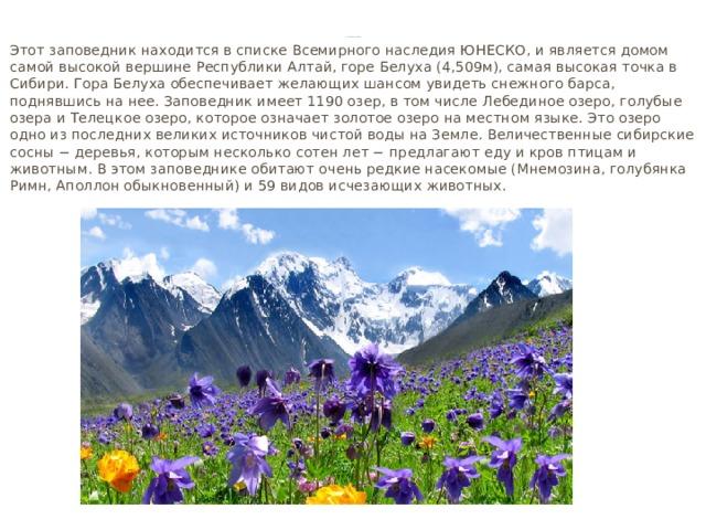 Алтайский заповедник   Этот заповедник находится в списке Всемирного наследия ЮНЕСКО, и является домом самой высокой вершине Республики Алтай, горе Белуха (4,509м), самая высокая точка в Сибири. Гора Белуха обеспечивает желающих шансом увидеть снежного барса, поднявшись на нее. Заповедник имеет 1190 озер, в том числе Лебединое озеро, голубые озера и Телецкое озеро, которое означает золотое озеро на местном языке. Это озеро одно из последних великих источников чистой воды на Земле. Величественные сибирские сосны − деревья, которым несколько сотен лет − предлагают еду и кров птицам и животным. В этом заповеднике обитают очень редкие насекомые (Мнемозина, голубянка Римн, Аполлон обыкновенный) и 59 видов исчезающих животных.