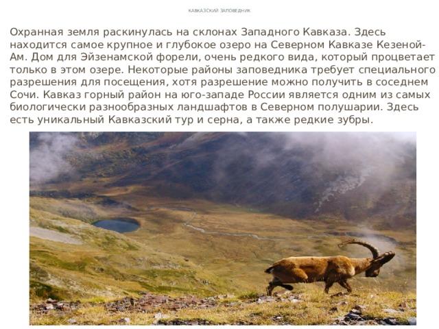 Кавказский заповедник Охранная земля раскинулась на склонах Западного Кавказа. Здесь находится самое крупное и глубокое озеро на Северном Кавказе Кезеной-Ам. Дом для Эйзенамской форели, очень редкого вида, который процветает только в этом озере. Некоторые районы заповедника требует специального разрешения для посещения, хотя разрешение можно получить в соседнем Сочи. Кавказ горный район на юго-западе России является одним из самых биологически разнообразных ландшафтов в Северном полушарии. Здесь есть уникальный Кавказский тур и серна, а также редкие зубры.
