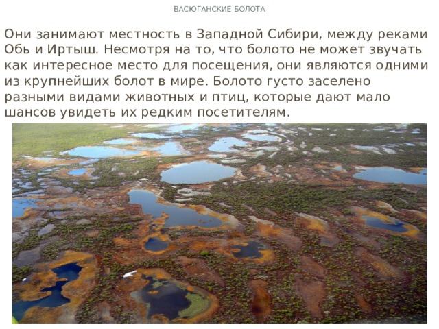 Васюганские болота Они занимают местность в Западной Сибири, между реками Обь и Иртыш. Несмотря на то, что болото не может звучать как интересное место для посещения, они являются одними из крупнейших болот в мире. Болото густо заселено разными видами животных и птиц, которые дают мало шансов увидеть их редким посетителям.