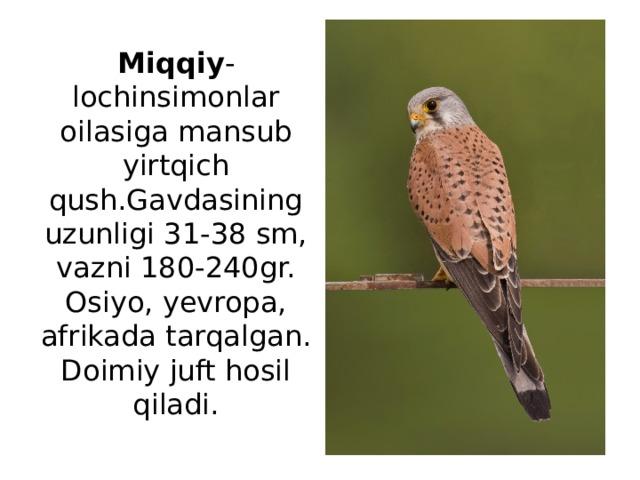 Miqqiy -lochinsimonlar oilasiga mansub yirtqich qush.Gavdasining uzunligi 31-38 sm, vazni 180-240gr. Osiyo, yevropa, afrikada tarqalgan. Doimiy juft hosil qiladi.