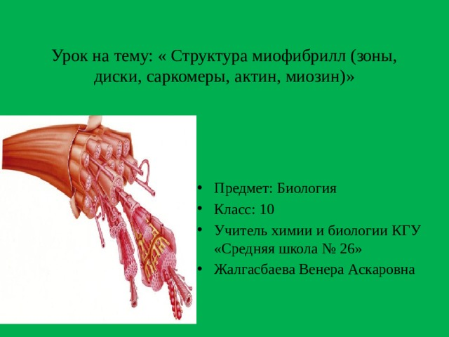 Урок на тему: « Структура миофибрилл (зоны, диски, саркомеры, актин, миозин)»