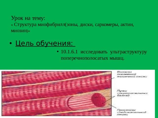 Урок на тему:  « Структура миофибрилл(зоны, диски, саркомеры, актин, миозин )»