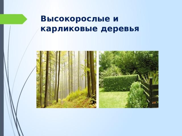 Высокорослые и карликовые деревья