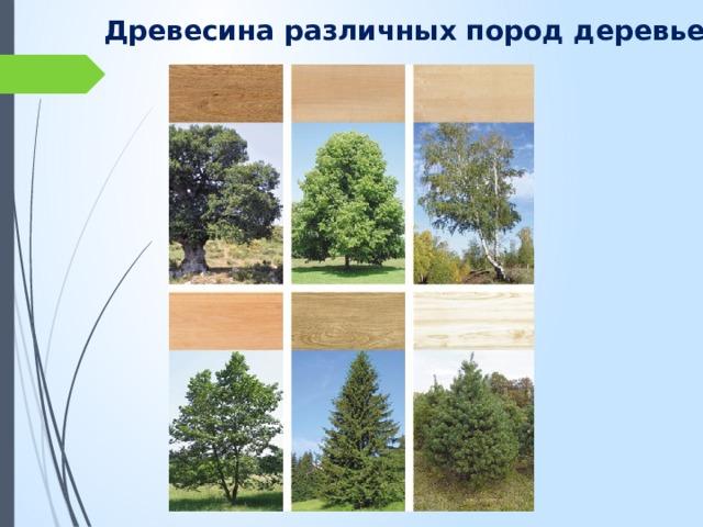 Древесина различных пород деревьев
