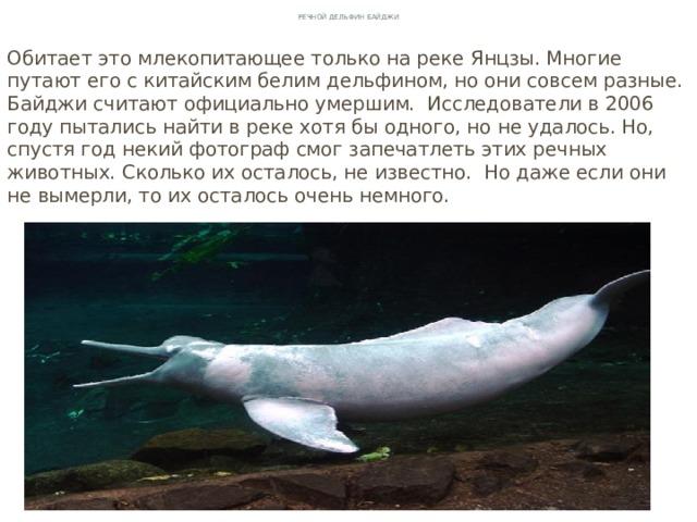 Речной дельфин Байджи Обитает это млекопитающее только на реке Янцзы. Многие путают его с китайским белим дельфином, но они совсем разные. Байджи считают официально умершим. Исследователи в 2006 году пытались найти в реке хотя бы одного, но не удалось. Но, спустя год некий фотограф смог запечатлеть этих речных животных. Сколько их осталось, не известно. Но даже если они не вымерли, то их осталось очень немного.