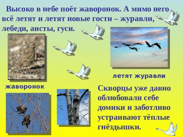 Высоко в небе поёт жаворонок. А мимо него всё летят и летят новые гости – журавли, лебеди, аисты, гуси. летят журавли жаворонок  Скворцы уже давно  облюбовали себе  домики и заботливо  устраивают тёплые  гнёздышки.