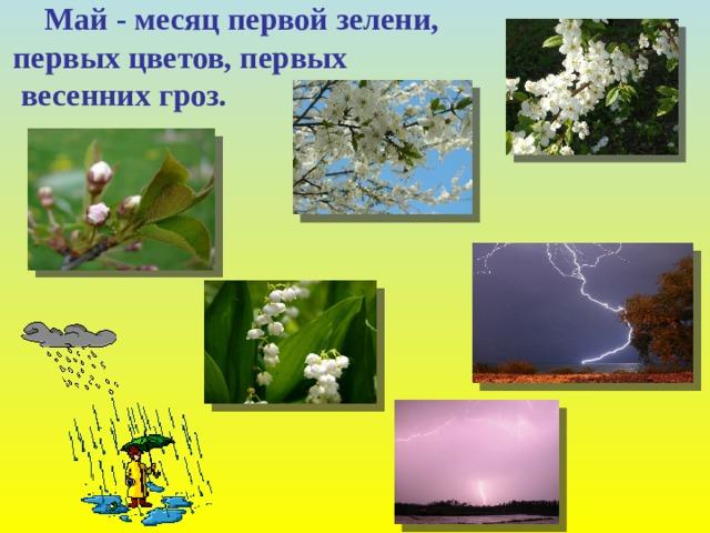 Май - месяц первой зелени, первых цветов, первых  весенних гроз.