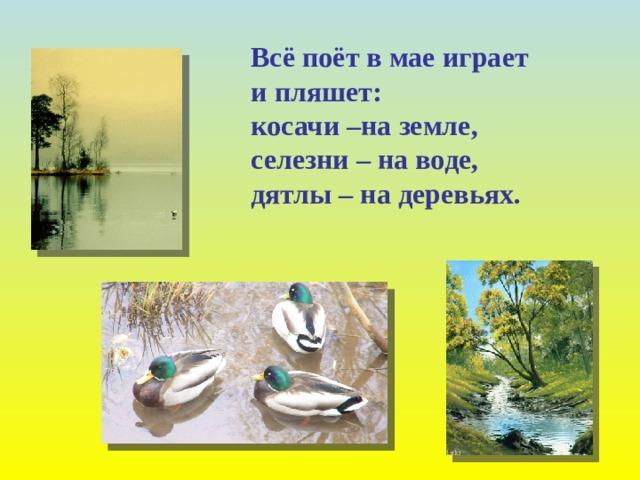 Всё поёт в мае играет и пляшет: косачи –на земле, селезни – на воде, дятлы – на деревьях.