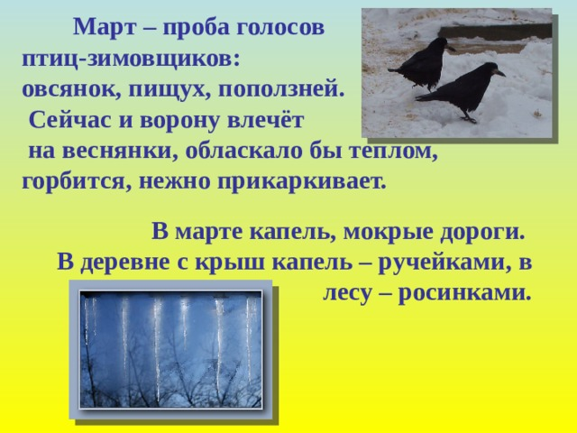 Март – проба голосов птиц-зимовщиков:  овсянок, пищух, поползней.  Сейчас и ворону влечёт  на веснянки, обласкало бы теплом, горбится, нежно прикаркивает.  В марте капель, мокрые дороги.  В деревне с крыш капель – ручейками, в лесу – росинками.