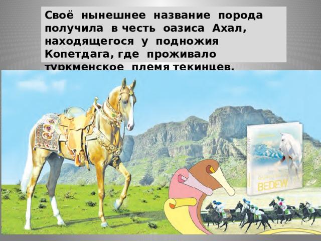 Своё нынешнее название порода получила в честь оазиса Ахал, находящегося у подножия Копетдага, где проживало туркменское племя текинцев.