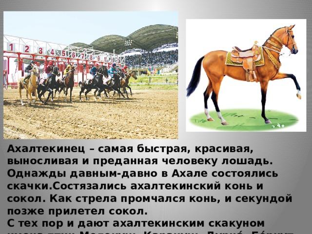 Ахалтекинец – самая быстрая, красивая, выносливая и преданная человеку лошадь. Однажды давным-давно в Ахале состоялись скачки.Состязались ахалтекинский конь и сокол. Как стрела промчался конь, и секундой позже прилетел сокол. С тех пор и дают ахалтекинским скакуном имена птиц Мелекуш, Каракуш, Дурна́, Бе́ркут.