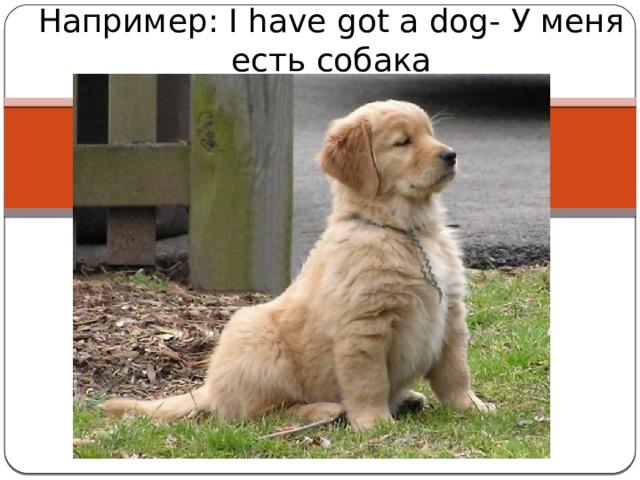 Например: I have got a dog- У меня есть собака