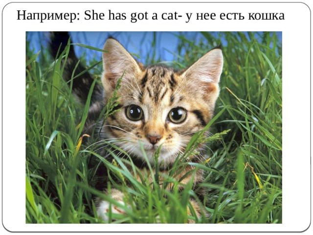 Например: She has got a cat- у нее есть кошка