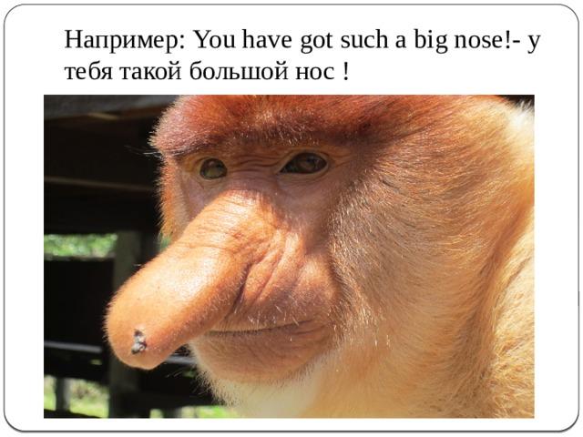 Например: You have got such a big nose!- у тебя такой большой нос !