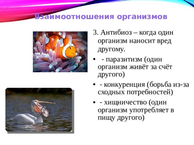 Взаимоотношения организмов 3. Антибиоз – когда один организм наносит вред другому.