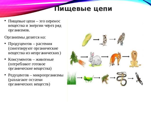 Пищевые цепи Пищевые цепи – это перенос вещества и энергии через ряд организмов . Организмы делятся на: