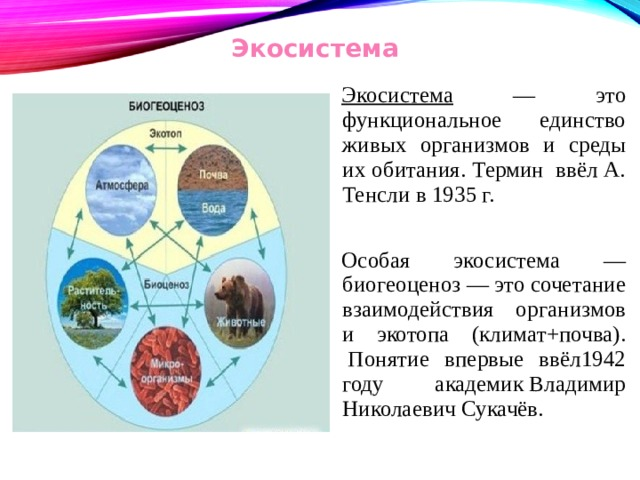 Экосистема Экосистема — это функциональное единство живых организмов и среды их обитания. Термин ввёл А. Тенсли в 1935 г. Особая экосистема — биогеоценоз — это сочетание взаимодействия организмов и экотопа (климат+почва). Понятие впервые ввёл1942 году академикВладимир Николаевич Сукачёв.