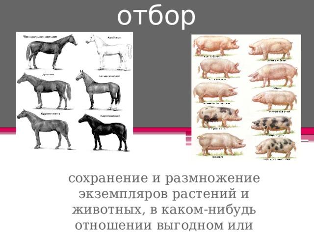 Искусственный отбор сохранение и размножение экземпляров растений и животных, в каком-нибудь отношении выгодном или полезном людям