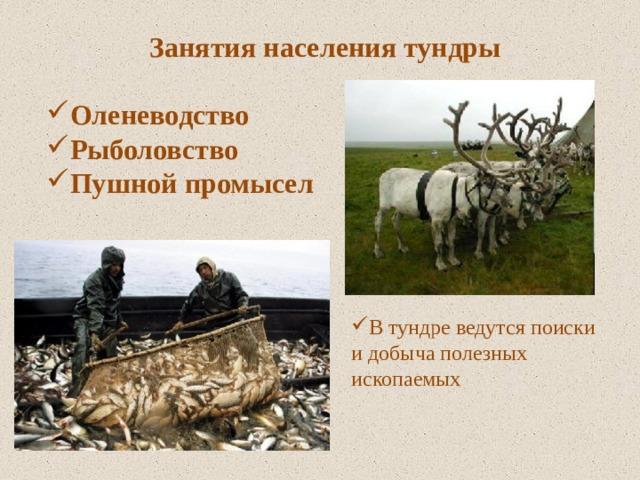 Занятия населения тундры  Оленеводство Рыболовство Пушной промысел