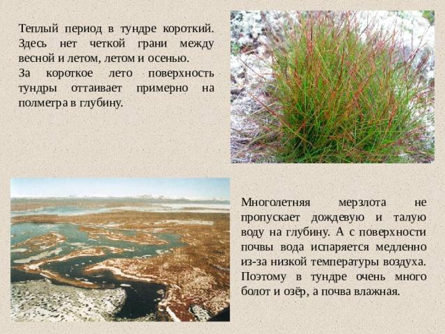 Теплый период в тундре короткий. Здесь нет четкой грани между весной и летом, летом и осенью. За короткое лето поверхность тундры оттаивает примерно на полметра в глубину. Многолетняя мерзлота не пропускает дождевую и талую воду на глубину. А с поверхности почвы вода испаряется медленно из-за низкой температуры воздуха. Поэтому в тундре очень много болот и озёр, а почва влажная.