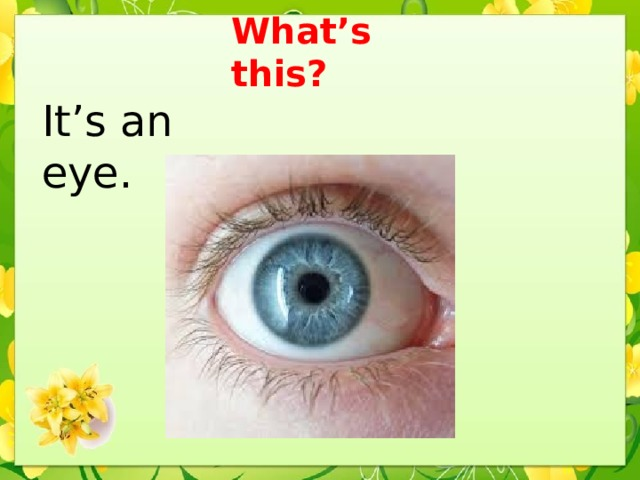 What's this? It's an eye.