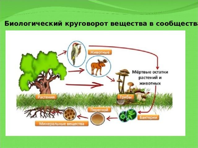 Биологический круговорот вещества в сообществах