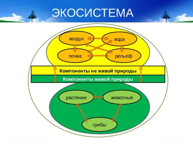 ЭКОСИСТЕМА воздух вода почва рельеф Компоненты не живой природы Компоненты живой природы животные растения грибы