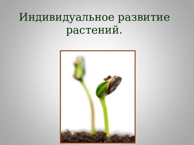 Индивидуальное развитие растений.