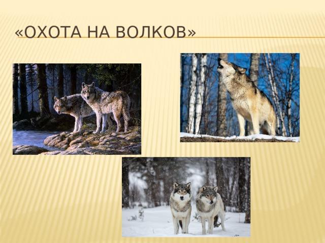 «Охота на волков»