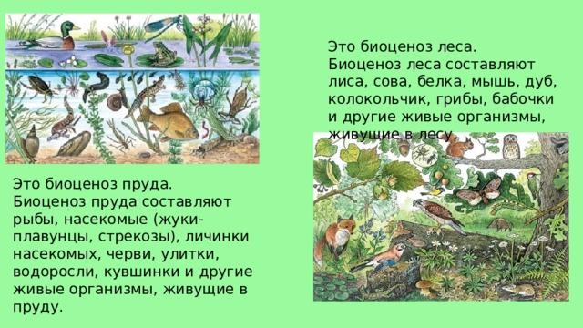 Это биоценоз леса. Биоценоз леса составляют лиса, сова, белка, мышь, дуб, колокольчик, грибы, бабочки и другие живые организмы, живущие в лесу. Это биоценоз пруда. Биоценоз пруда составляют рыбы, насекомые (жуки-плавунцы, стрекозы), личинки насекомых, черви, улитки, водоросли, кувшинки и другие живые организмы, живущие в пруду.