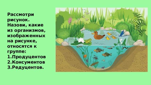 Рассмотри рисунок. Назови, какие из организмов, изображенных на рисунке, относятся к группе: