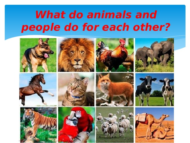 What do animals and people do for each other?