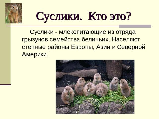 Суслики. Кто это?  Суслики - млекопитающие из отряда грызунов семейства беличьих. Населяют степные районы Европы, Азии и Северной Америки.