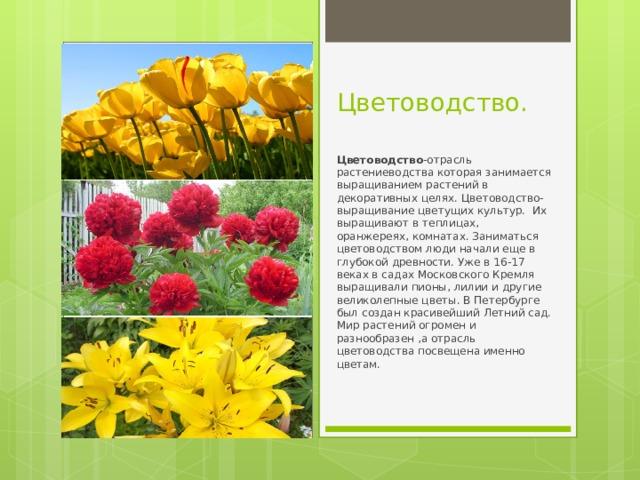 Цветоводство. Цветоводство -отрасль растениеводства которая занимается выращиванием растений в декоративных целях. Цветоводство- выращивание цветущих культур. Их выращивают в теплицах, оранжереях, комнатах. Заниматься цветоводством люди начали еще в глубокой древности. Уже в 16-17 веках в садах Московского Кремля выращивали пионы, лилии и другие великолепные цветы. В Петербурге был создан красивейший Летний сад. Мир растений огромен и разнообразен ,а отрасль цветоводства посвещена именно цветам.