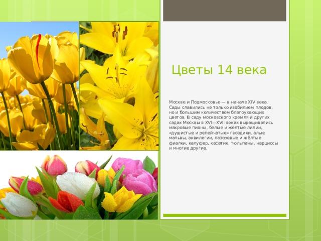 Цветы 14 века  Москве и Подмосковье — в начале XIV века. Сады славились не только изобилием плодов, но и большим количеством благоухающих цветов. В саду московского кремля и других садах Москвы в XVI—XVII веках выращивались махровые пионы, белые и жёлтые лилии, «душистые и репейчатые» гвоздики, алые мальвы, аквилегии, лазоревые и жёлтые фиалки, калуфер, касатик, тюльпаны, нарциссы и многие другие.
