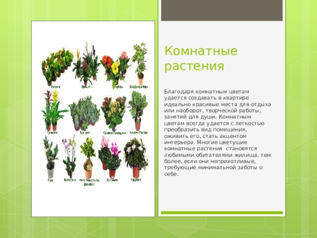 Комнатные растения Благодаря комнатным цветам удается создавать в квартире идеально красивые места для отдыха или наоборот, творческой работы, занятий для души. Комнатным цветам всегда удается с легкостью преобразить вид помещения, оживить его, стать акцентом интерьера. Многие цветущие комнатные растения становятся любимыми обитателями жилища, тем более, если они неприхотливые, требующие минимальной заботы о себе.