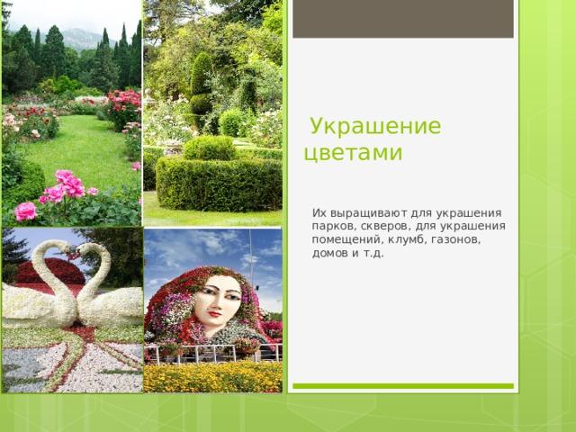Украшение цветами Их выращивают для украшения парков, скверов, для украшения помещений, клумб, газонов, домов и т.д.