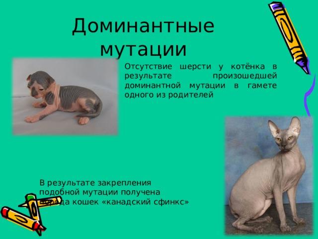 Доминантные мутации Отсутствие шерсти у котёнка в результате произошедшей доминантной мутации в гамете одного из родителей В результате закрепления подобной мутации получена порода кошек «канадский сфинкс»