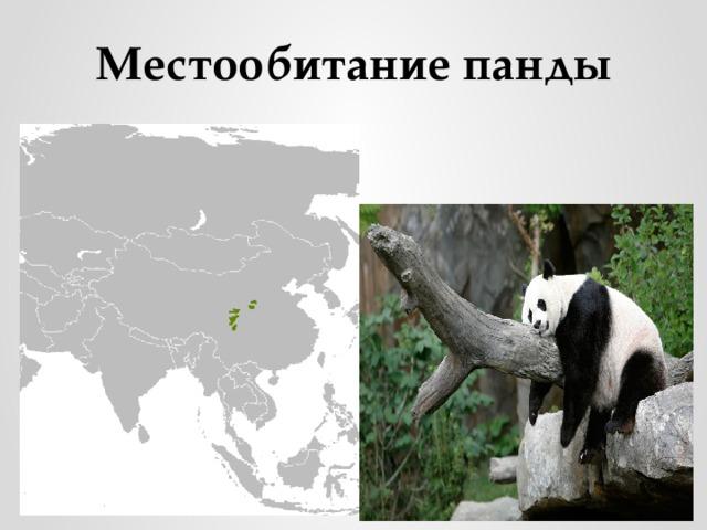 Местообитание панды