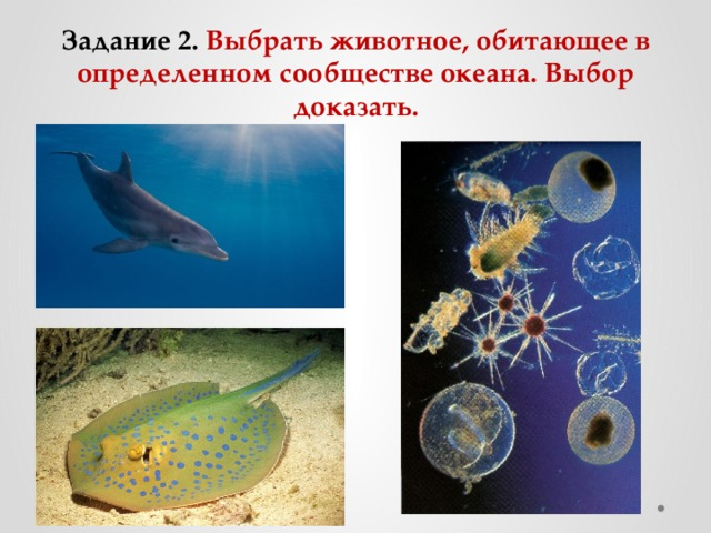 Задание 2. Выбрать животное, обитающее в определенном сообществе океана. Выбор доказать.