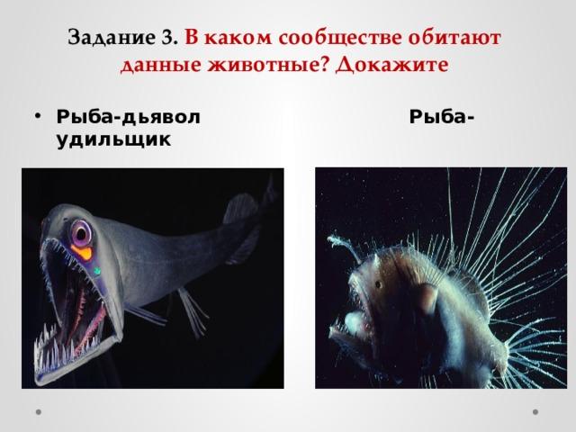 Задание 3. В каком сообществе обитают данные животные? Докажите