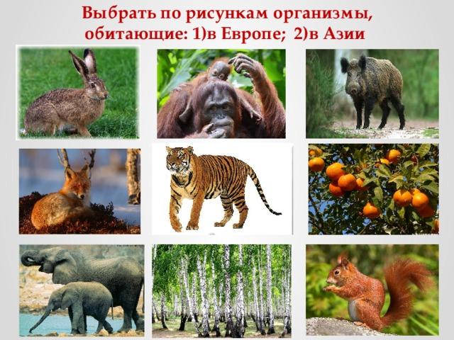 Выбрать по рисункам организмы, обитающие: 1)в Европе; 2)в Азии
