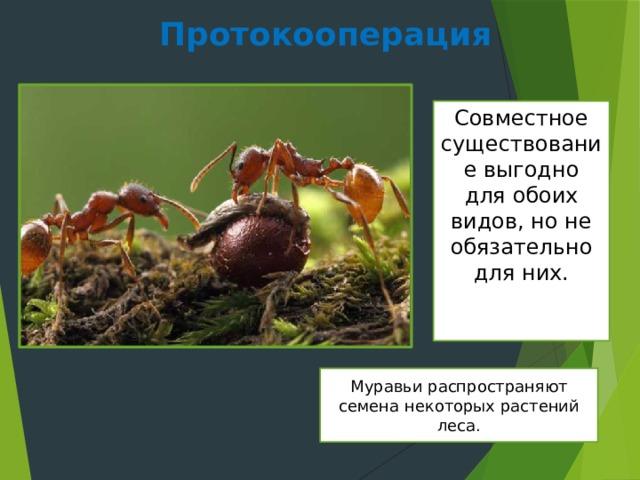 Протокооперация Совместное существование выгодно для обоих видов, но не обязательно для них. Муравьи распространяют семена некоторых растений леса.