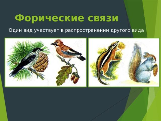 Форические связи Один вид участвует в распространении другого вида